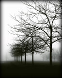 Tis Foggy by Starglow, photography->landscape gallery