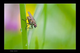 Posing I by kodo34, photography->insects/spiders gallery