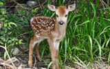 Bambi by 0930_23, photography->animals gallery