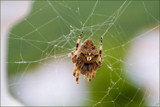 beauty is only skindeep!!....... not for the faint hearted! by fogz, photography->insects/spiders gallery