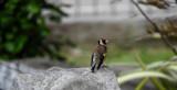 Bird by braces, photography->birds gallery