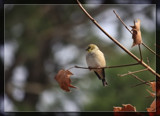 Perfect Balance by Jimbobedsel, photography->birds gallery