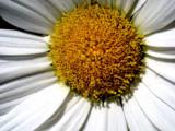 fleur by tahaddi_challenge, Photography->Flowers gallery