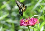 From Ruby's Garden Of Plenty #2 by tigger3, photography->butterflies gallery