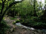 Broceliande Forest by jesouris, Photography->Landscape gallery