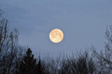 """""""SUPER WORM MOON"""" by icedancer, photography->skies gallery"""