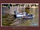 Mallard Couple 2 by gerryp, Photography->Birds gallery