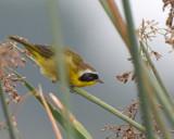 Gone but not Forgotten by garrettparkinson, photography->birds gallery