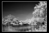 Infra red 2 by JQ, Photography->Landscape gallery