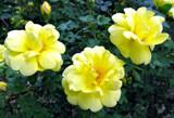 Morning Has Broken by Nikoneer, photography->flowers gallery