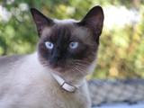 Tater Eyes by Slozguyz, Photography->Pets gallery