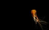 Jellies 1 by zunazet, photography->underwater gallery