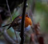 I bet by biffobear, photography->birds gallery
