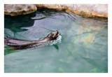 Splish Splash by RL, photography->animals gallery