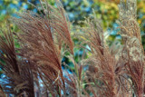 Autumnal Grass by timw4mail, photography->flowers gallery