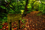 Signpost by biffobear, photography->landscape gallery