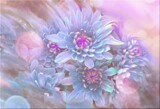 Dream Daisies. by LynEve, photography->manipulation gallery