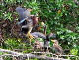 Feeding Frenzy by allisontaylor, Photography->Birds gallery