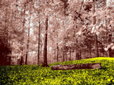 Enchanted Forest by bfrank, Photography->Manipulation gallery