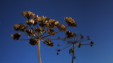Seedhead and sky by coram9, photography->nature gallery