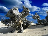 Coral Stand on a Bahamian Beach by kentjohnson, Photography->Shorelines gallery