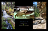 In the Waters of Spearfish by Nikoneer, photography->water gallery