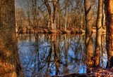 Wooded Reflections by tigger3, photography->water gallery