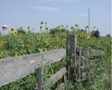 Summertime Blues by jojomercury, photography->landscape gallery
