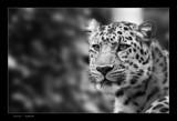 Kitty b&w by kodo34, photography->animals gallery