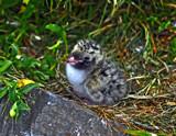 Mommy by biffobear, Photography->Birds gallery