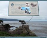 Lone Cypress Tree by PhotoKandi, Photography->Shorelines gallery