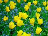 Yellows and blues and greens by gr8fulted, Photography->Flowers gallery