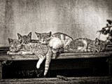 Kitties Asleep In BW by bfrank, contests->b/w challenge gallery