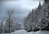Another winter scene by GIGIBL, photography->landscape gallery