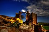 Wallflower by biffobear, photography->castles/ruins gallery
