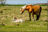 Motherly Care by corngrowth, photography->animals gallery