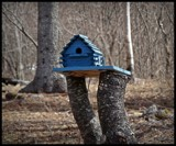Bird house by GIGIBL, photography->nature gallery