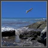 In Flight by ccmerino, Photography->Shorelines gallery