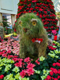 Shaggy Dog by Pistos, photography->gardens gallery
