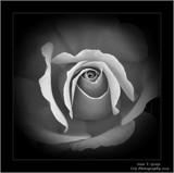 Heavenly Medium.. by Roseman_Stan, photography->manipulation gallery