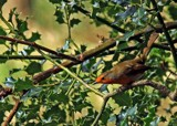 The Ambush by biffobear, photography->birds gallery