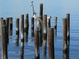 Decorative Pilings by mimi, Photography->Architecture gallery