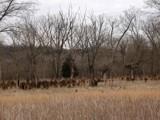 Lone Elk Park by jojomercury, photography->landscape gallery