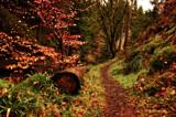 Log Jam by biffobear, photography->landscape gallery