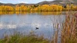 Twizel Autumn #2 by LynEve, photography->shorelines gallery