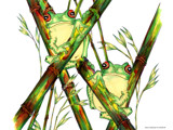 Frogs on the bamboo by andy721, Illustrations->Traditional gallery