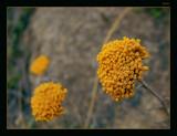 Berg Flower by dmk, Photography->Flowers gallery