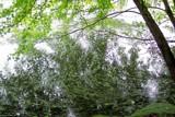 Green Swirls by kidder, Photography->Shorelines gallery