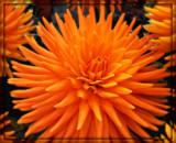 Eye Opener by trixxie17, photography->flowers gallery