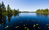 Deep in the woods... by SEFA, photography->landscape gallery